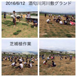 IMG_20160612-酒匂川河川敷グランド芝補植_2