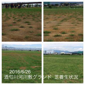 IMG_20160626-酒匂川河川敷グランド芝経過
